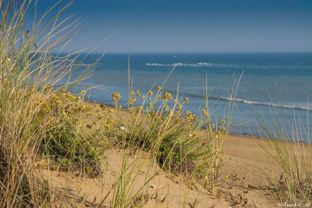 plage nature et sauvage dans l'Estuaire de la Gironde